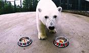 北极熊联合会杯猜中德国获胜