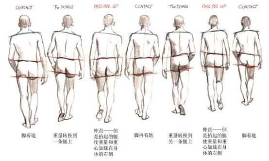 动画基础 第五章 人物走路的运动规律 动作分解图跳跃动作高清图片