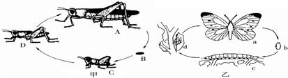 (4)青蛙的发育和昆虫一样也属于______发育,发育过程中呼吸器官的图片