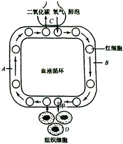 色情囹�a��dy��yd�a�9�_a.气体扩散作用       b.肺泡的扩张与回缩 c.呼吸作用           d.