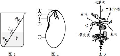 生物 探究种子萌发的条件.  (1)菜豆种子的萌发需要适宜的外界条件.