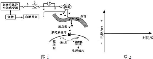人体生理构造固�_如图1所示是人体胰岛素分泌调节及发挥生理作用的示意