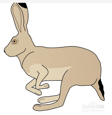 彩笔怎样画兔子 铅笔画兔子教程