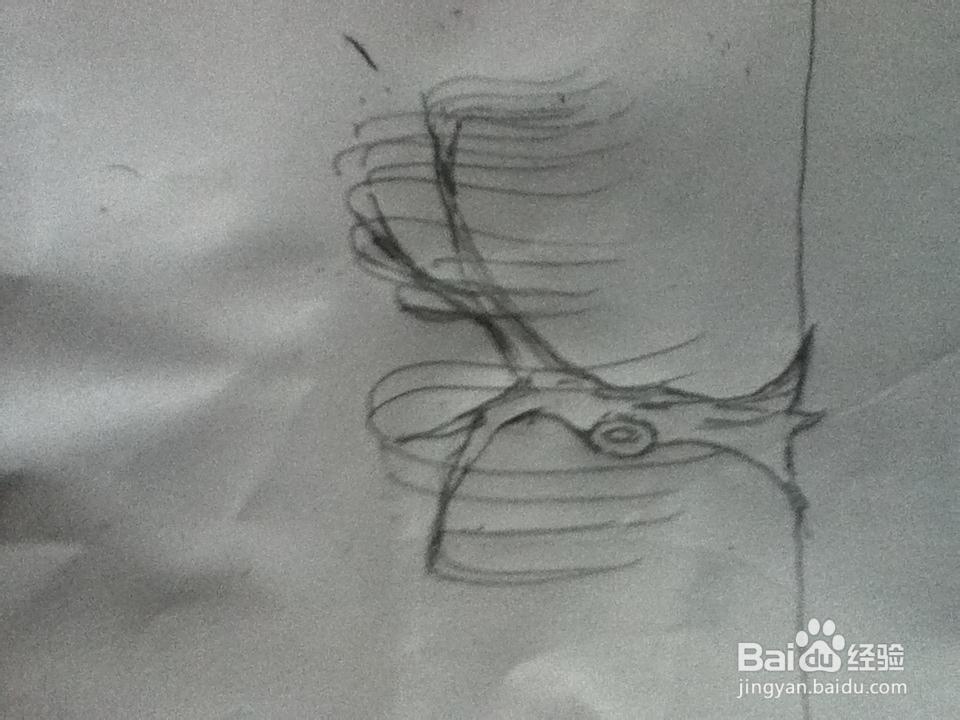 柳树的简笔画