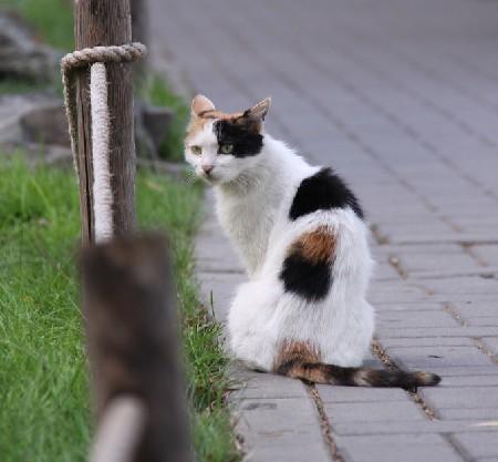 过敏症状_猫腹水症状_猫耳螨症状图片_猫螨虫症状_猫 ...