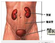 急性膀胱炎病程较短 如及时治疗