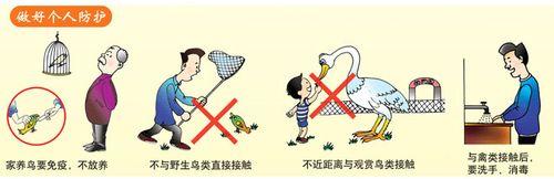如何预防禽流感_个人如何预防禽流感