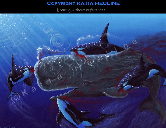 关于虎鲸的图片_