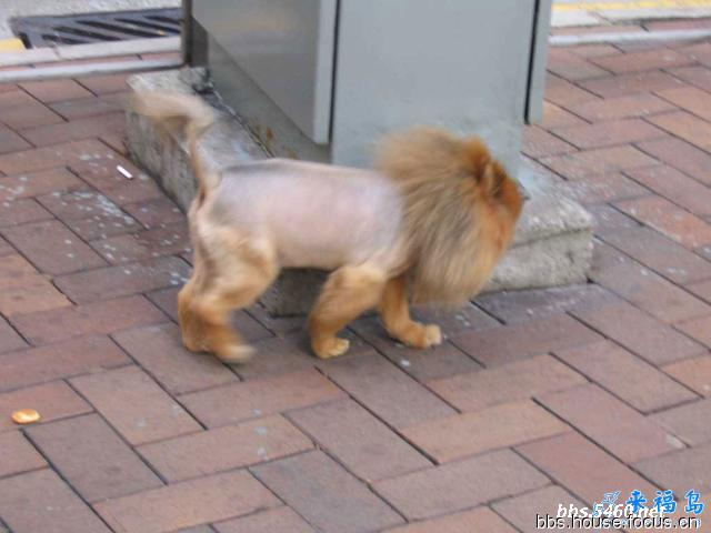 Lion Cut On Cats Pictures