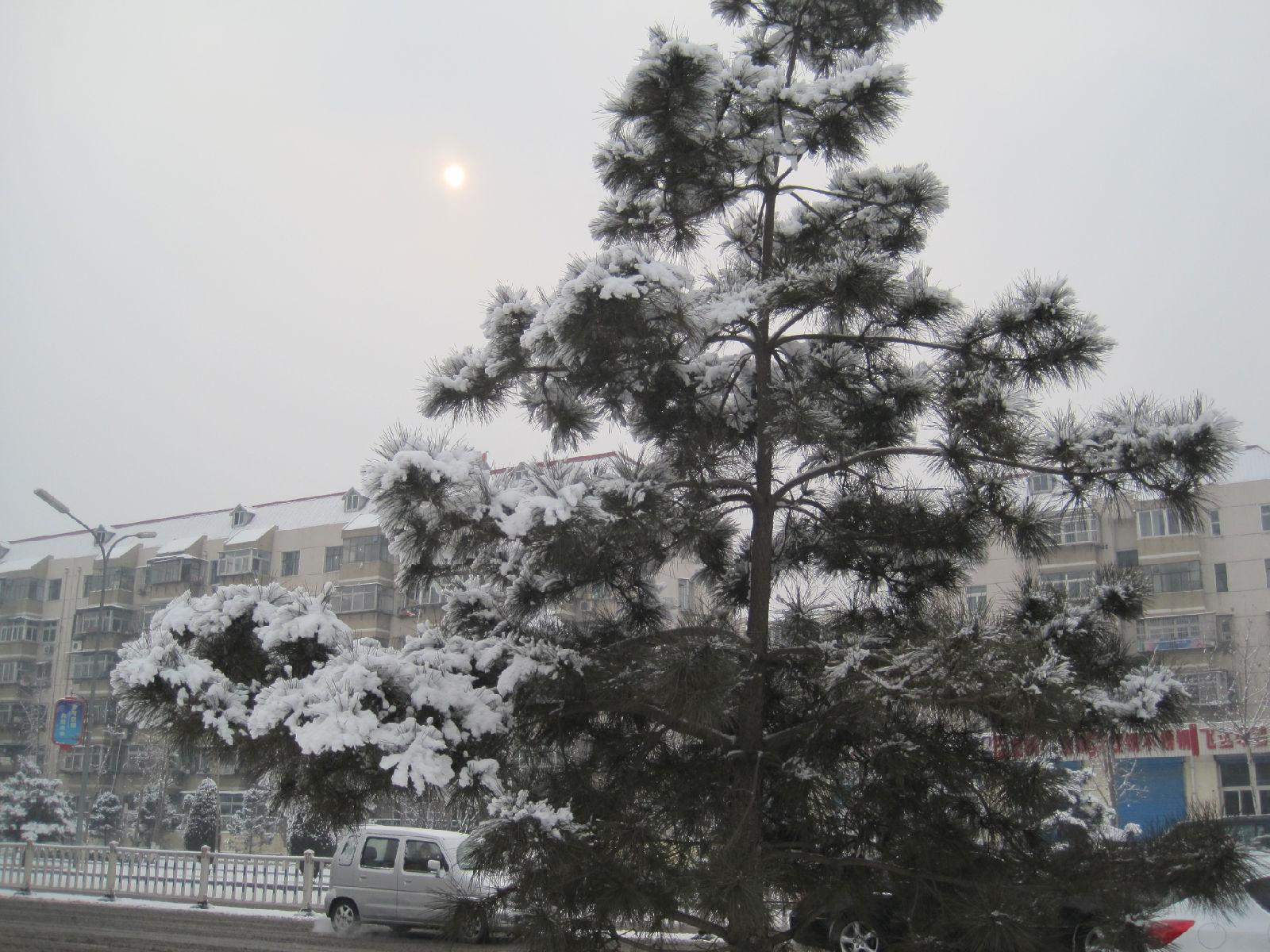2.13唐山市雪景图片赏图片