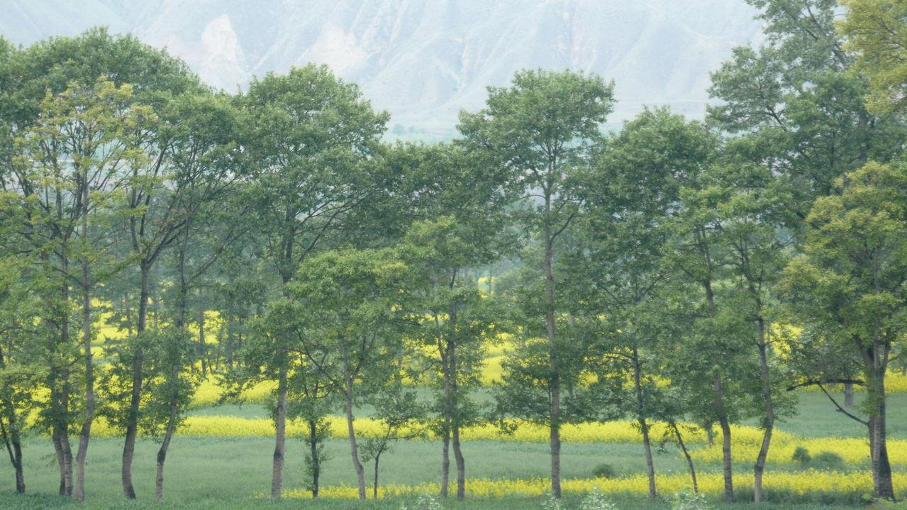 青海青--2009