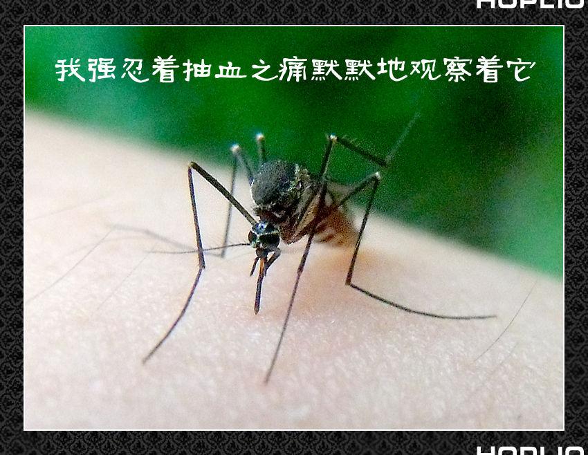 驱赶蚊子、蚂蚁、蟑螂的妙法 - hi - Sinoboom