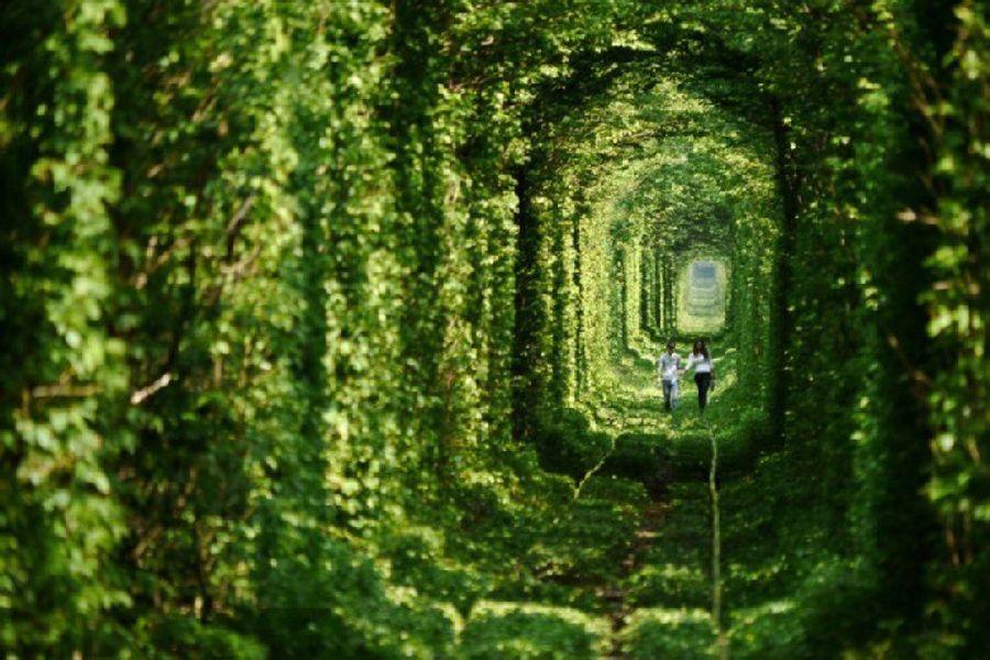 很漂亮吧,位于乌克兰的一条火车道,周围都是树