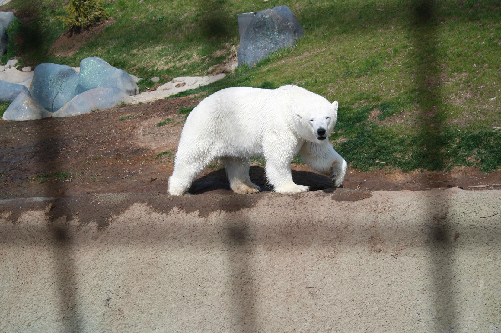 北极熊8.4猴子打野天赋图片