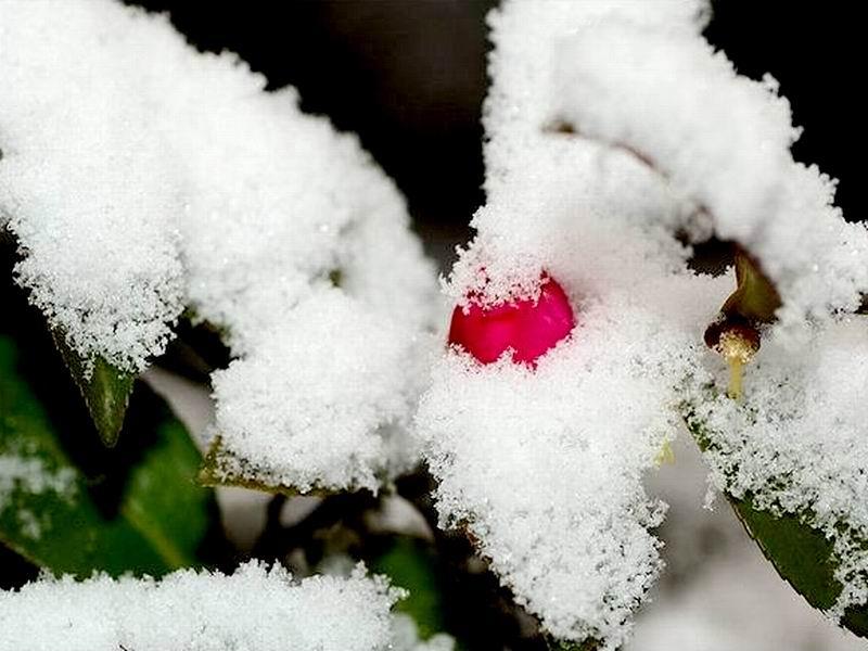 寒梅傲雪(图片一) 宝宝贝贝 百度空间
