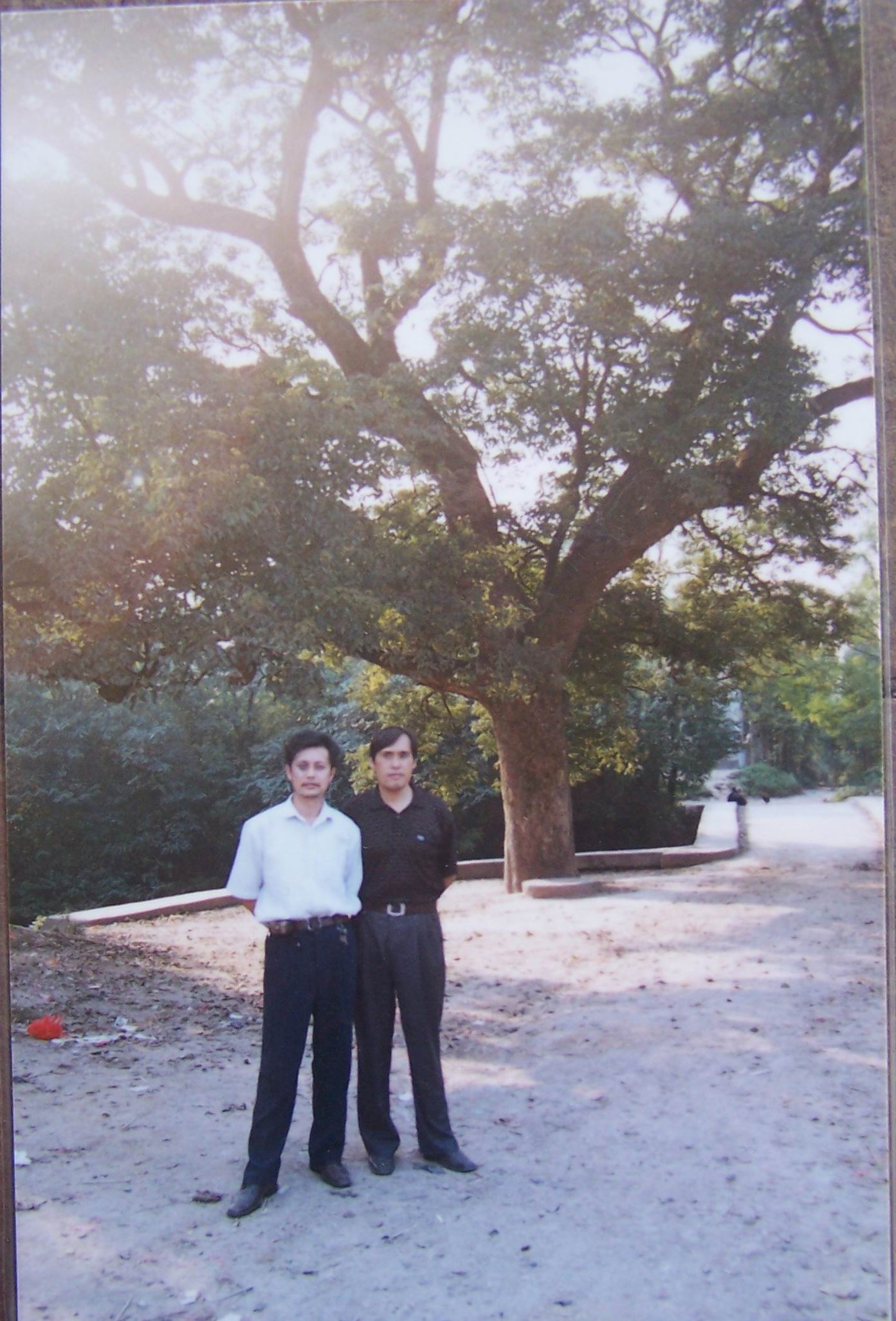 [原创]云梦古泽的湿地生态遗存--重阳树 - 拾荒斋 - laixp19630419的博客