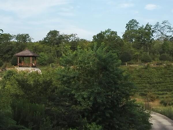 曹山紫竹林生态农业园图片