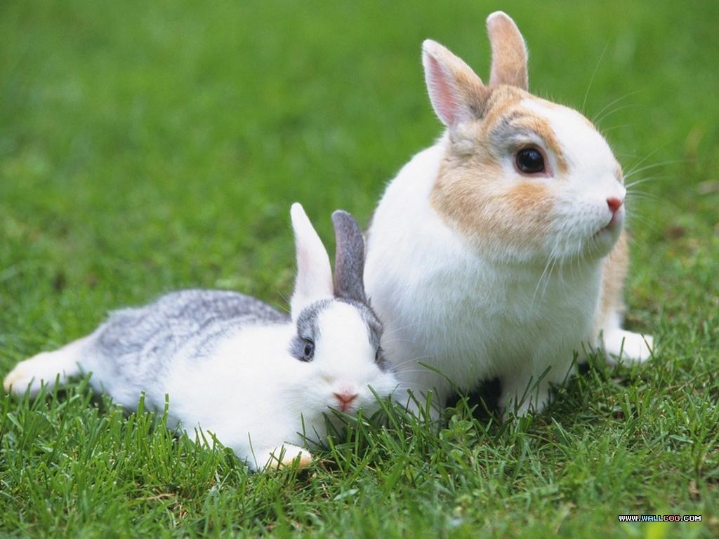 动物兔子狗狗狗大象1024_768粘贴画壁纸图片