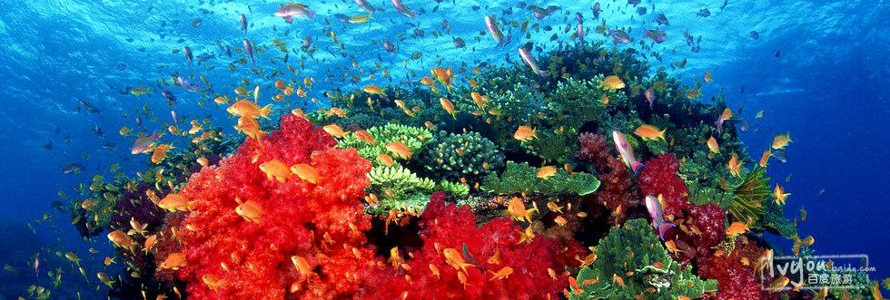 徜徉在海底世界