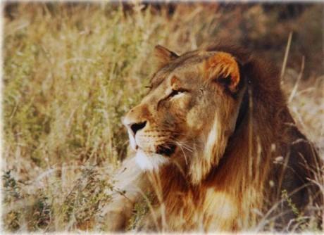 狮子界十大传奇档案系列 雄狮联盟篇 转