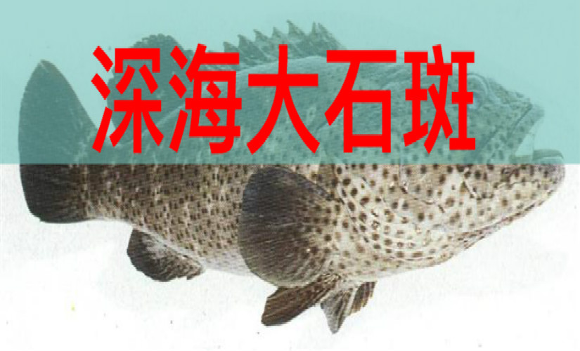 汕头深海大石斑火锅(云城东路店)