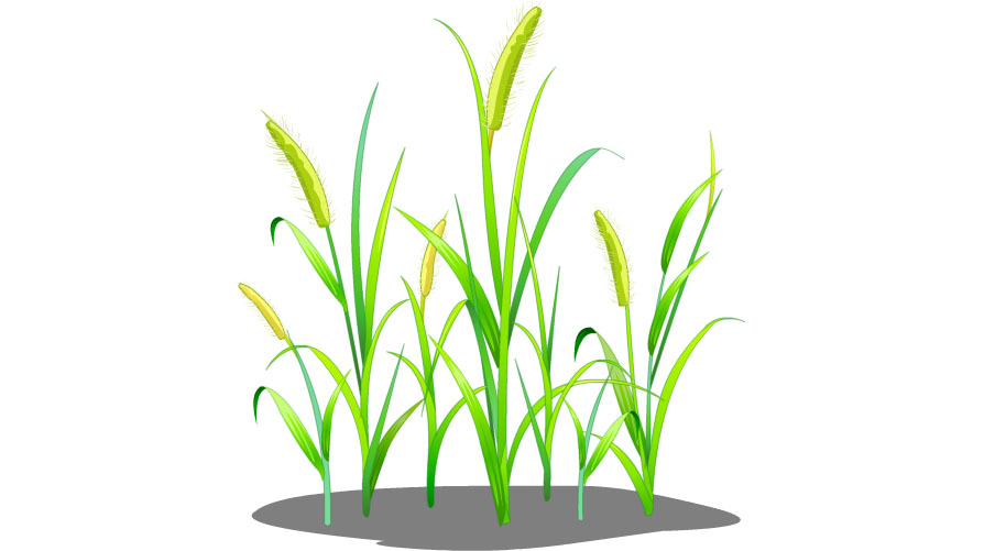 农场作物_QQ农场作物熟了怎么不能收获了_QQ农场