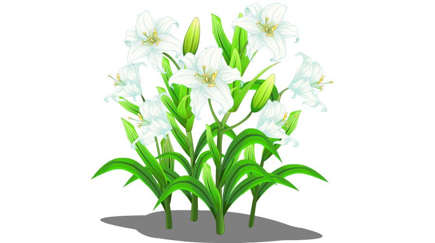 农场作物_好友QQ农场已成熟的作物无法摘取有哪些情况