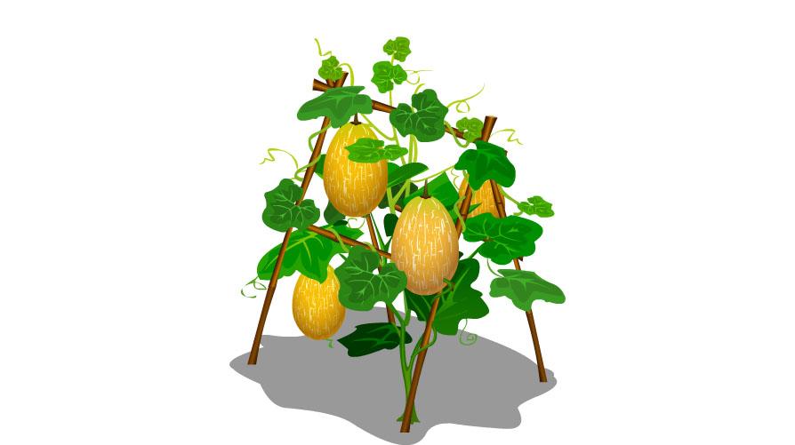 农场作物_回复【图鉴】QQ农场作物成熟后高解析对稳