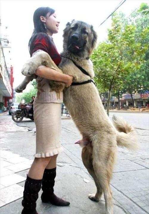 转】天下奇闻 人与狗交_上善达人de空间_百度空间