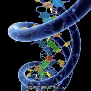12簇DNA 特异功能