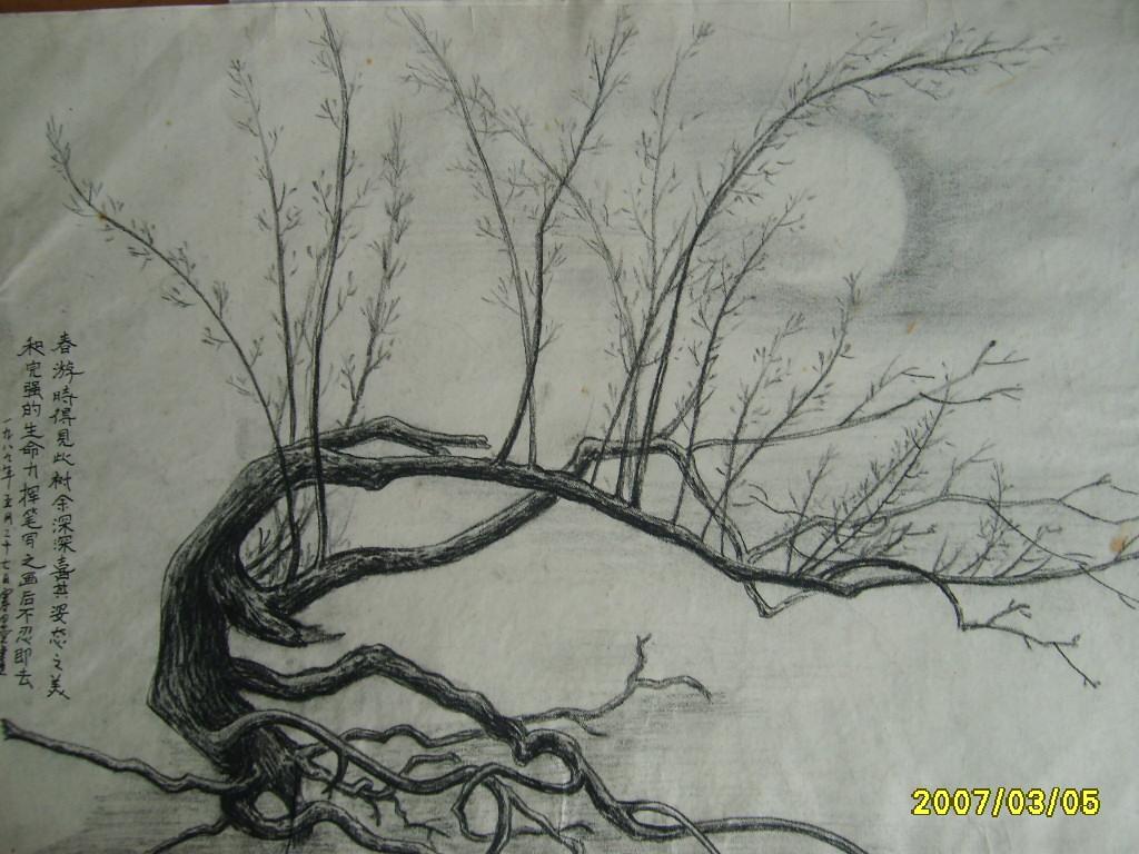 铅笔速写树的画法图片