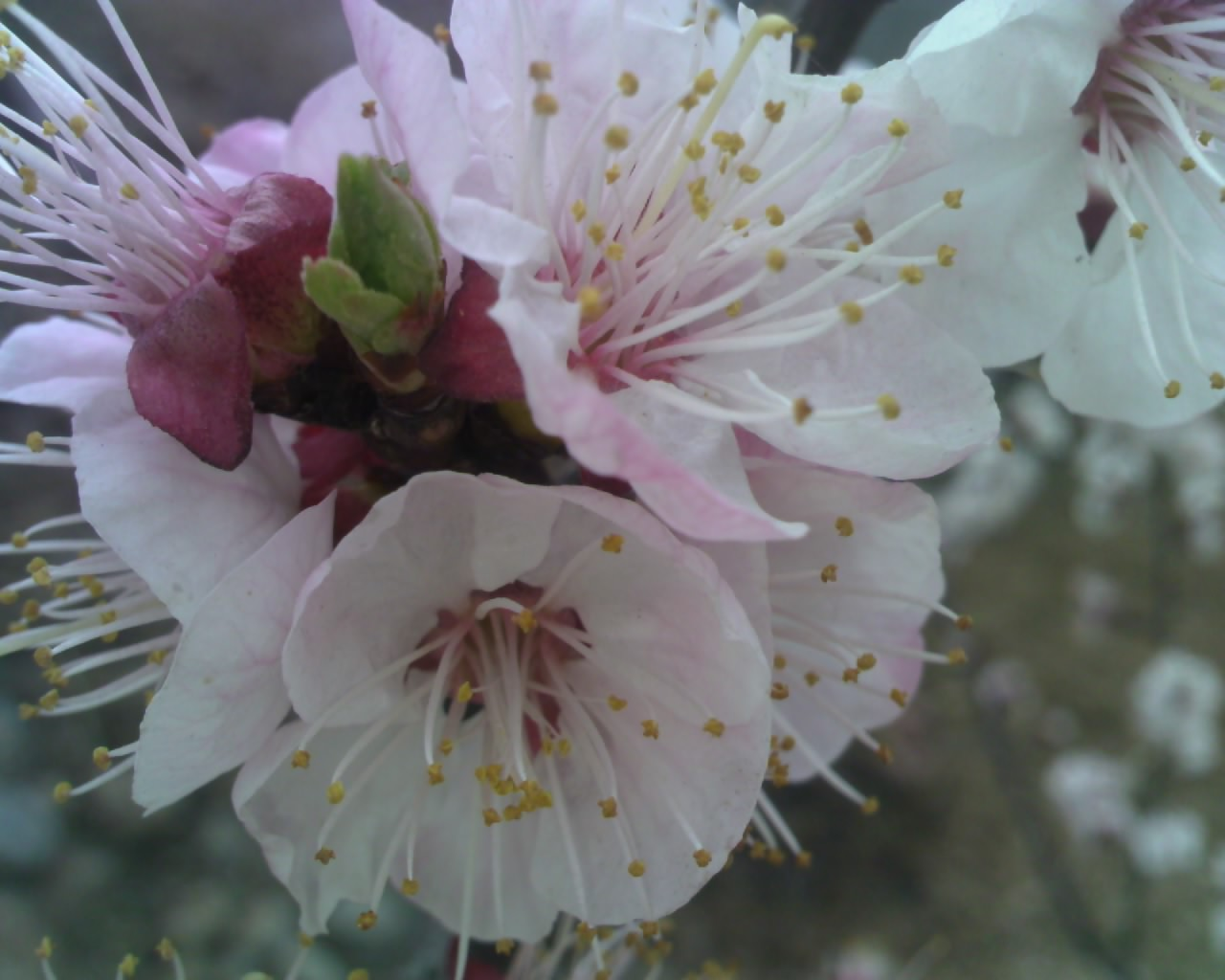 春季开花的树图片],春季 开花的 植物有哪些图片