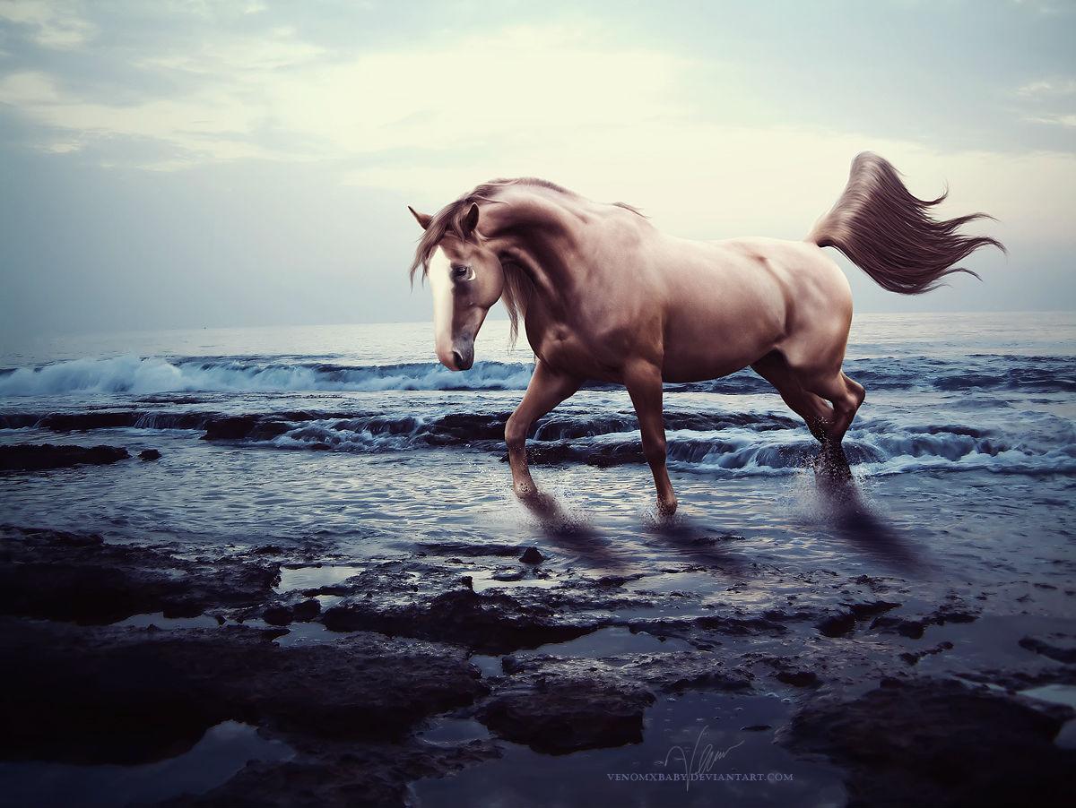 photography>美国女摄影师设计师venomx