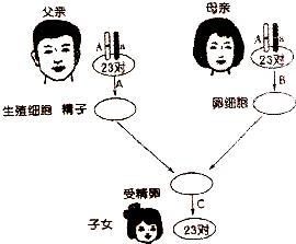 图为人类生殖过程中染色体数目变化示意图和一对 ...