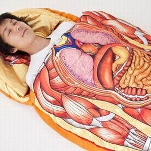五脏六腑位置图图片 人体五脏六腑位置图,人体五脏六腑分布高清图片