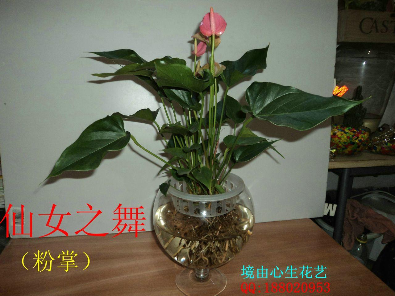 常见的家养花种类_2014常见花卉名称和图片常见花卉图片及名称 花卉图片及名称大全 ...