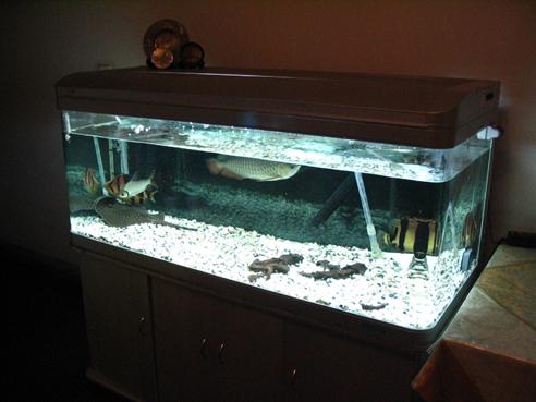 上滤鱼缸改造_一个改造成品缸上滤不足的好方法【鹦鹉鱼吧】_百度贴吧