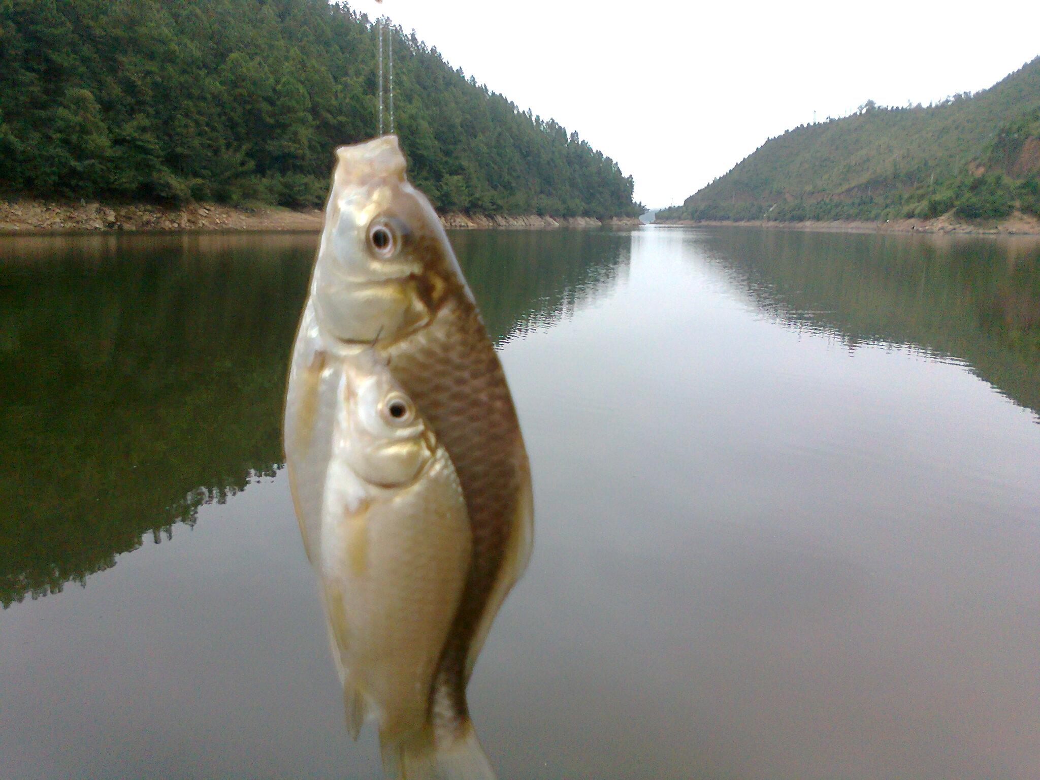 钓鱼吧_水库图片_钓鱼吧_百度贴吧