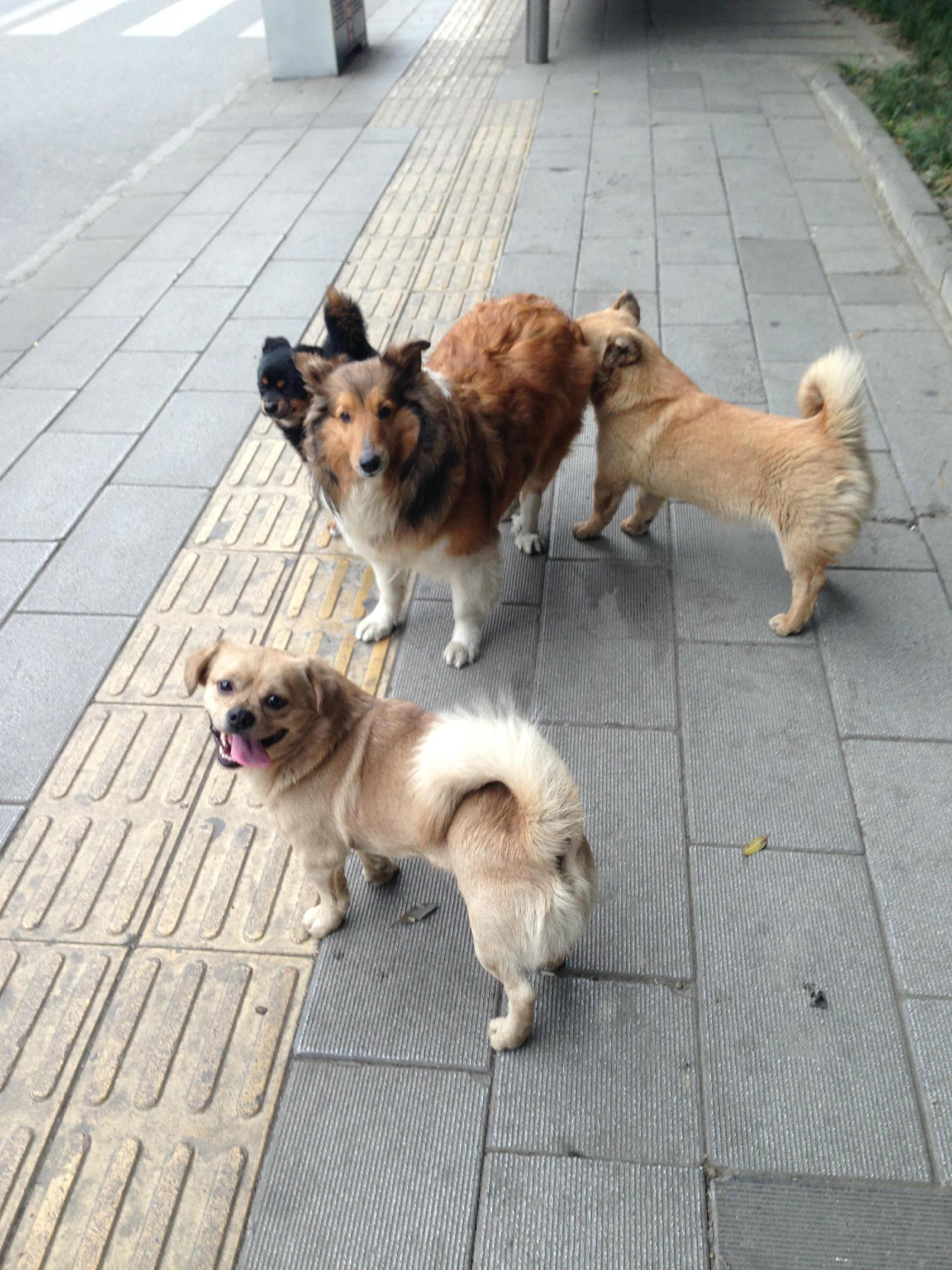 狗猩交配视频_动物世界性行为群狗_人和动物性行为_动物性行为大全_动物性 ...