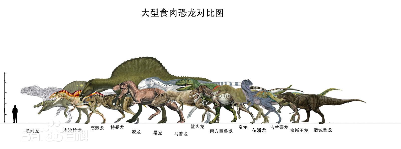 十大肉食恐龙图片 百度百科