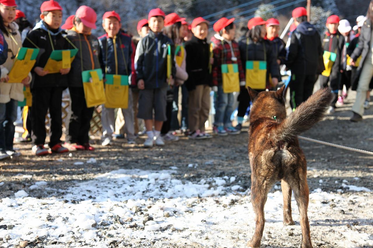 广西猎狗打猎视频_四川青川犬图片