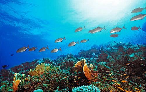 是有生命,能自行增殖和不斷更新的海洋資源圖片