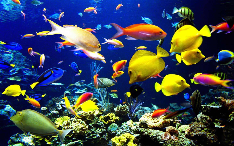 海洋生物是指海洋里有生命的物種,包括海洋動物,海洋植物,微生物及圖片
