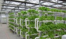 溫室無土栽培-管道栽培,墻體栽培實例