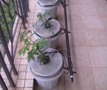 家庭種植果菜