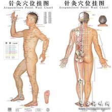 女人体戴乳夹_人体穴位中包括经外奇穴在内有致命穴70个.