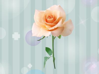 香槟色玫瑰花_香槟玫瑰_百度百科