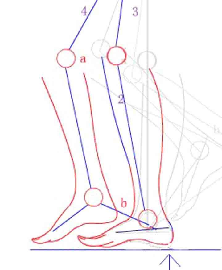 腳的前進弧度及落地前腳尖的上揚~~這個可以通過自己走路的實踐來理解圖片