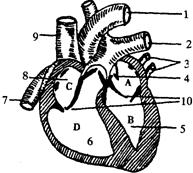 �9�+��ky����a_结合人的心脏的模型和心脏解剖图,认识心脏的结构.:(a