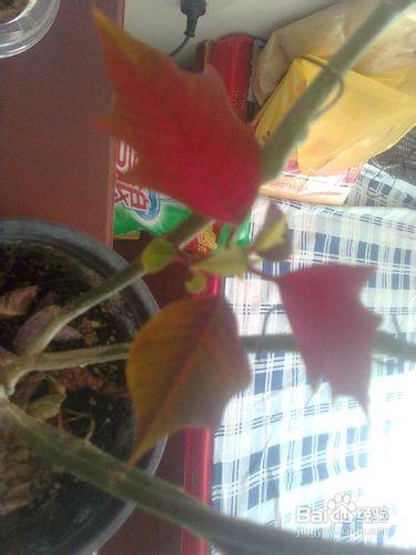 盆栽花卉图片及名称